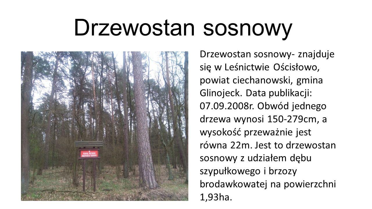 Drzewostan sosnowy Drzewostan sosnowy- znajduje się w Leśnictwie Ościsłowo, powiat ciechanowski, gmina Glinojeck. Data publikacji: 07.09.2008r. Obwód