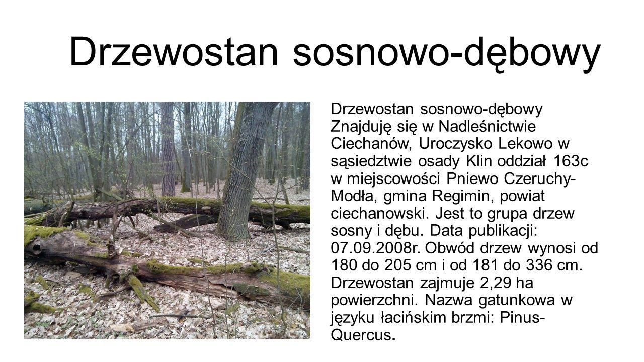 Koniec Autorzy:  Milena Bialik kl.VI  Wiktoria Kozicka kl.