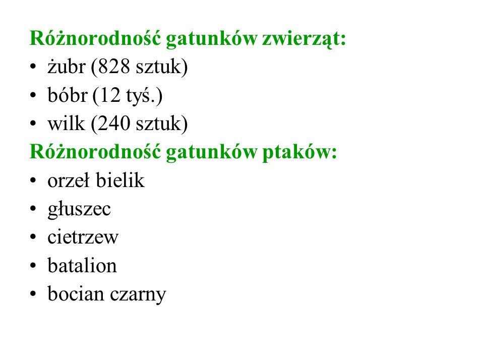 Różnorodność gatunków zwierząt: żubr (828 sztuk) bóbr (12 tyś.) wilk (240 sztuk) Różnorodność gatunków ptaków: orzeł bielik głuszec cietrzew batalion bocian czarny