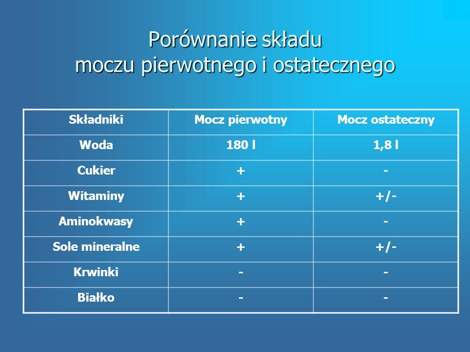 Porównanie składu moczu pierwotnego i ostatecznego SkładnikiMocz pierwotnyMocz ostateczny Woda180 l1,8 l Cukier+- Witaminy++/- Aminokwasy+- Sole mineralne++/- Krwinki-- Białko--