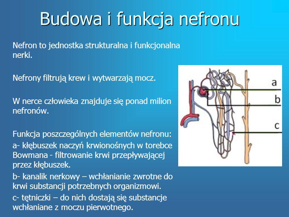 Budowa i funkcja nefronu Nefron to jednostka strukturalna i funkcjonalna nerki.