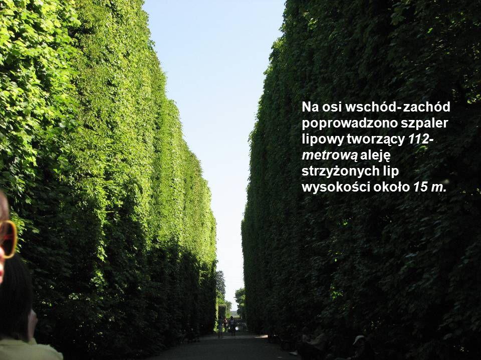 Na osi wschód- zachód poprowadzono szpaler lipowy tworzący 112- metrową aleję strzyżonych lip wysokości około 15 m.