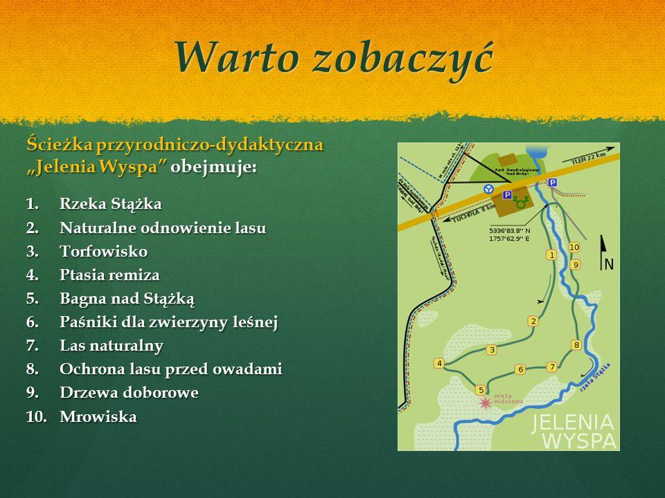 """Warto zobaczyć Źródło: http://mojebory.blogspot.com/ Nieopodal siedziby Nadleśnictwa Tuchola w Gołąbku biegnie ścieżka przyrodniczo-dydaktyczna """"Jelenia Wyspa ."""
