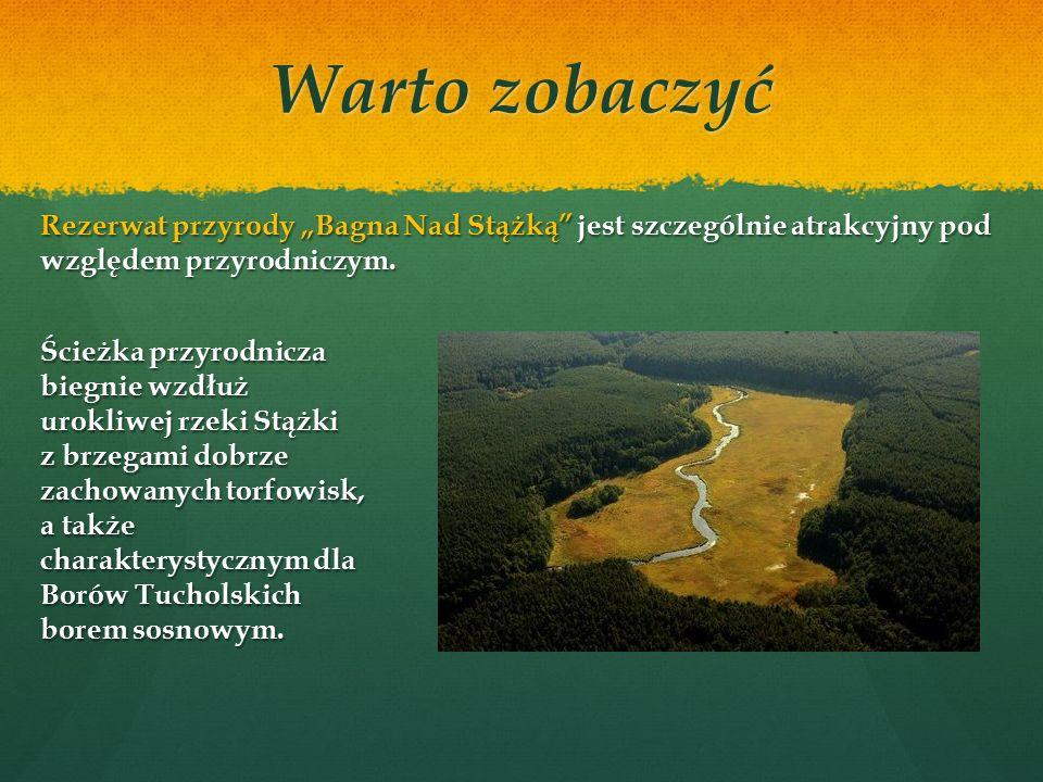 Rezerwat Cisy Staropolskie im.