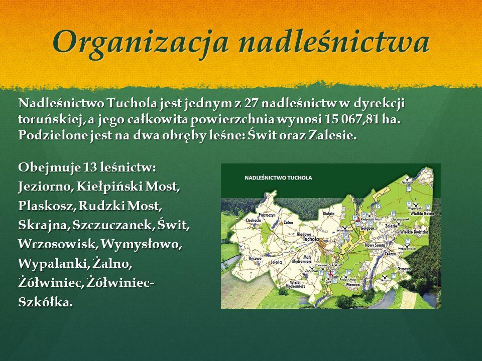 Nadleśnictwo - definicja Nadleśnictwo jest podstawową, samodzielną jednostką organizacyjną Lasów Państwowych działającą na podstawie ustawy o lasach.