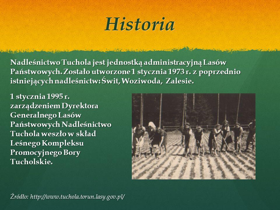 Organizacja nadleśnictwa Nadleśnictwo Tuchola jest jednym z 27 nadleśnictw w dyrekcji toruńskiej, a jego całkowita powierzchnia wynosi 15 067,81 ha.