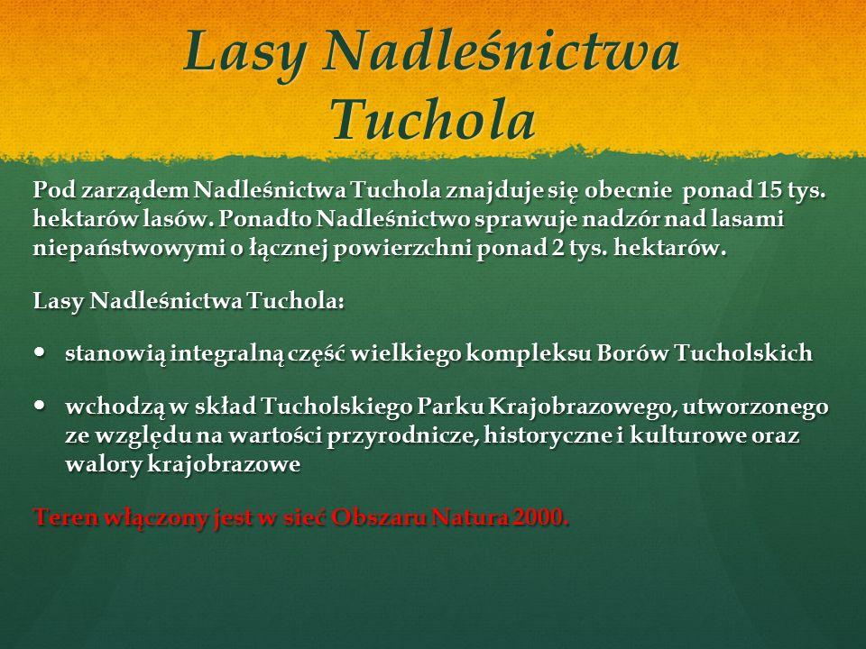 Najstarszym śladem osadnictwa na tym terenie jest stanowisko neolityczne nad Brdą w Leśnictwie Wymysłowo.