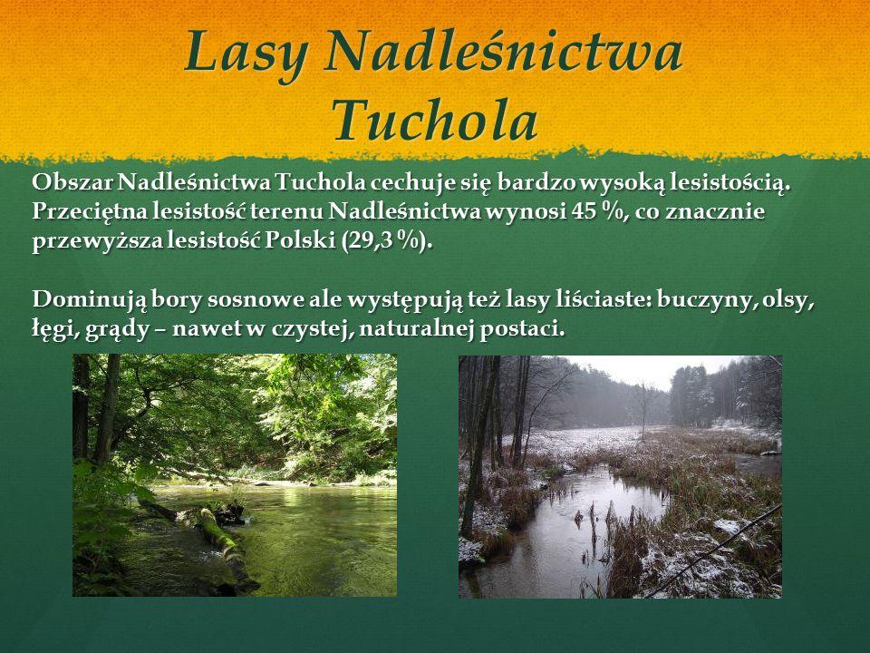 Lasy Nadleśnictwa Tuchola Pod zarządem Nadleśnictwa Tuchola znajduje się obecnie ponad 15 tys.