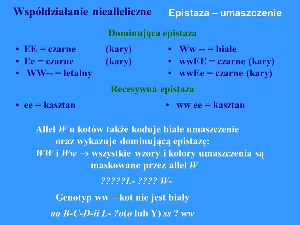 Epistaza – umaszczenie Dominująca epistaza EE = czarne(kary) Ww -- = białe Ee = czarne (kary) wwEE = czarne (kary) WW-- = letalny wwEe = czarne (kary)