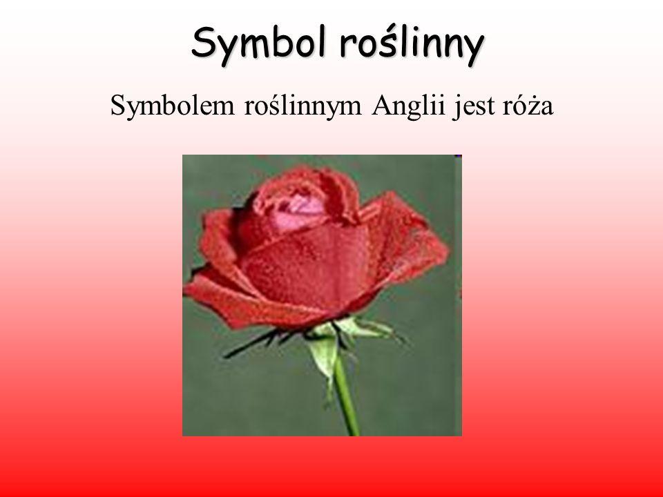 Symbol roślinny Symbolem roślinnym Anglii jest róża
