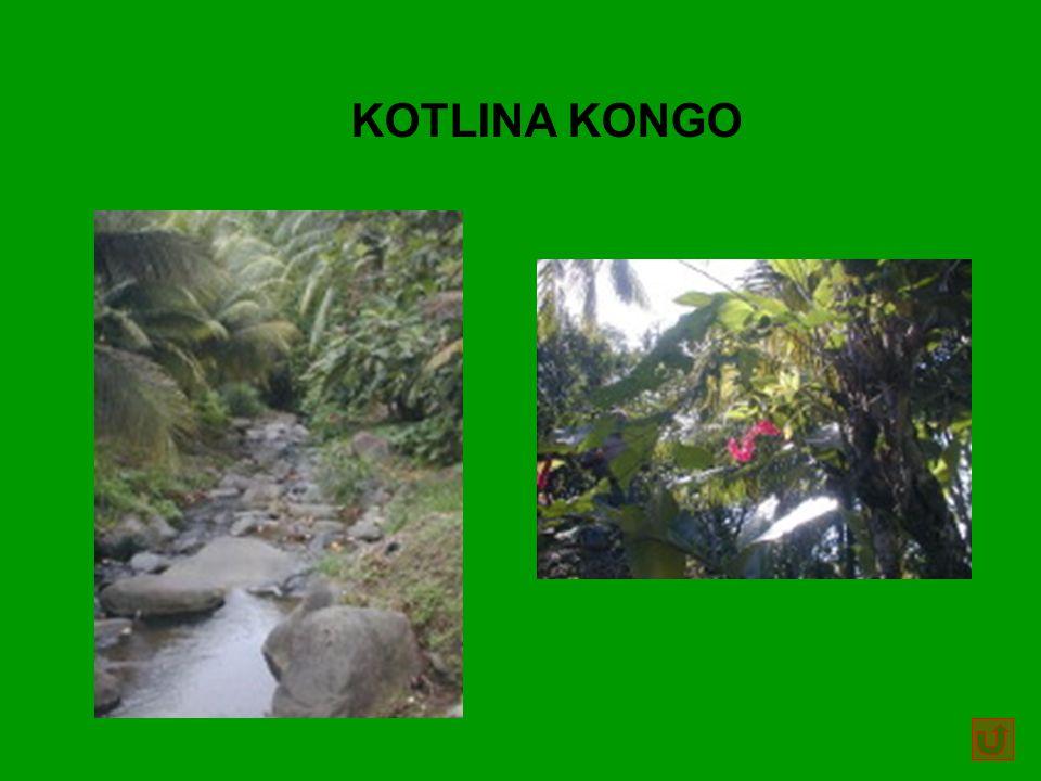 KOTLINA KONGO