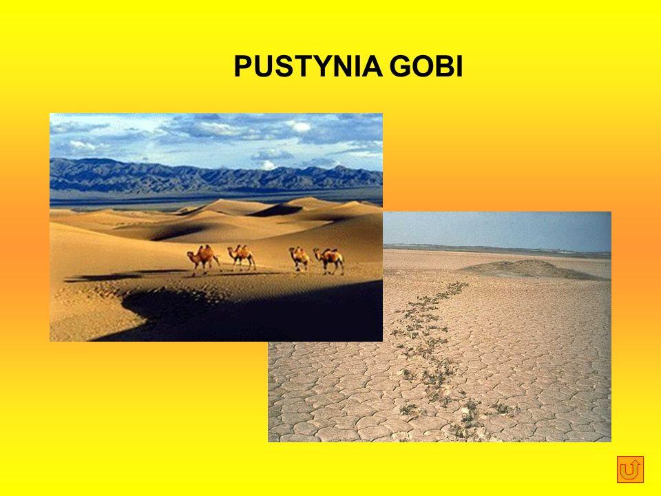 PUSTYNIA GOBI