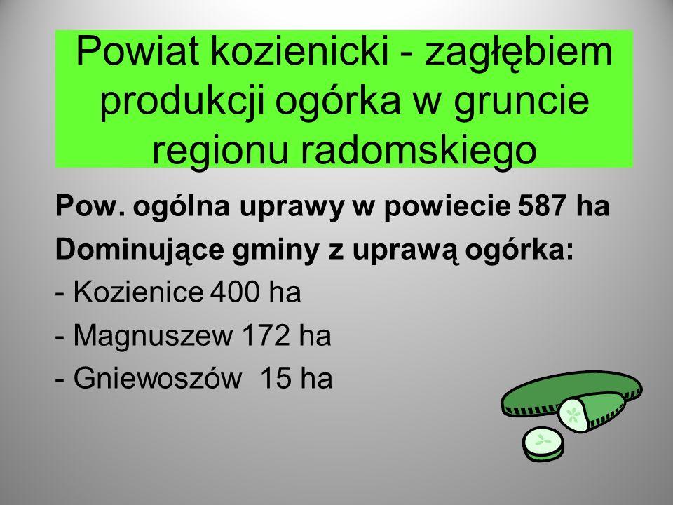 Powiat kozienicki - zagłębiem produkcji ogórka w gruncie regionu radomskiego Pow.