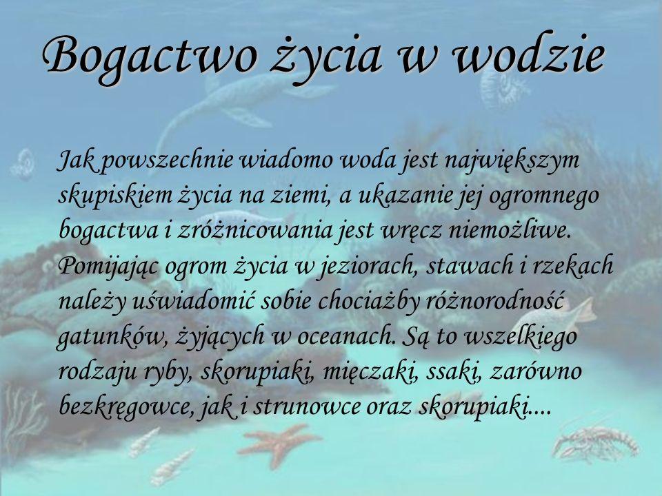 Źródła: Internet: - http://www.aquadocinter.pl - http://www.ekologia.gemapro.vip.alpha.pl - http://www.maitri.diecezja.gda.pl - http://pl.wikipedia.com