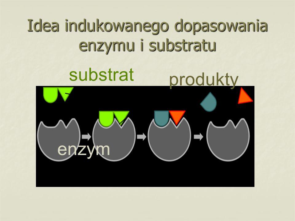 Idea indukowanego dopasowania enzymu i substratu enzym substrat produkty