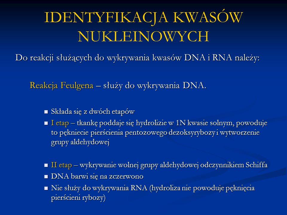 IDENTYFIKACJA KWASÓW NUKLEINOWYCH Do reakcji służących do wykrywania kwasów DNA i RNA należy: Reakcja Feulgena – służy do wykrywania DNA.