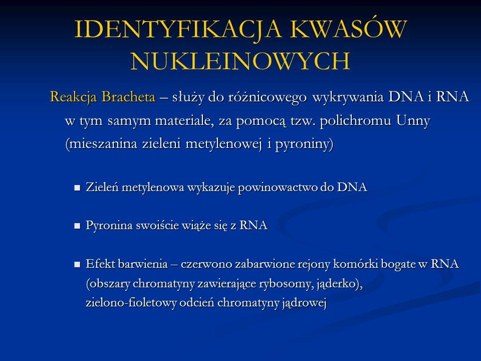 IDENTYFIKACJA KWASÓW NUKLEINOWYCH Reakcja Bracheta – służy do różnicowego wykrywania DNA i RNA w tym samym materiale, za pomocą tzw.