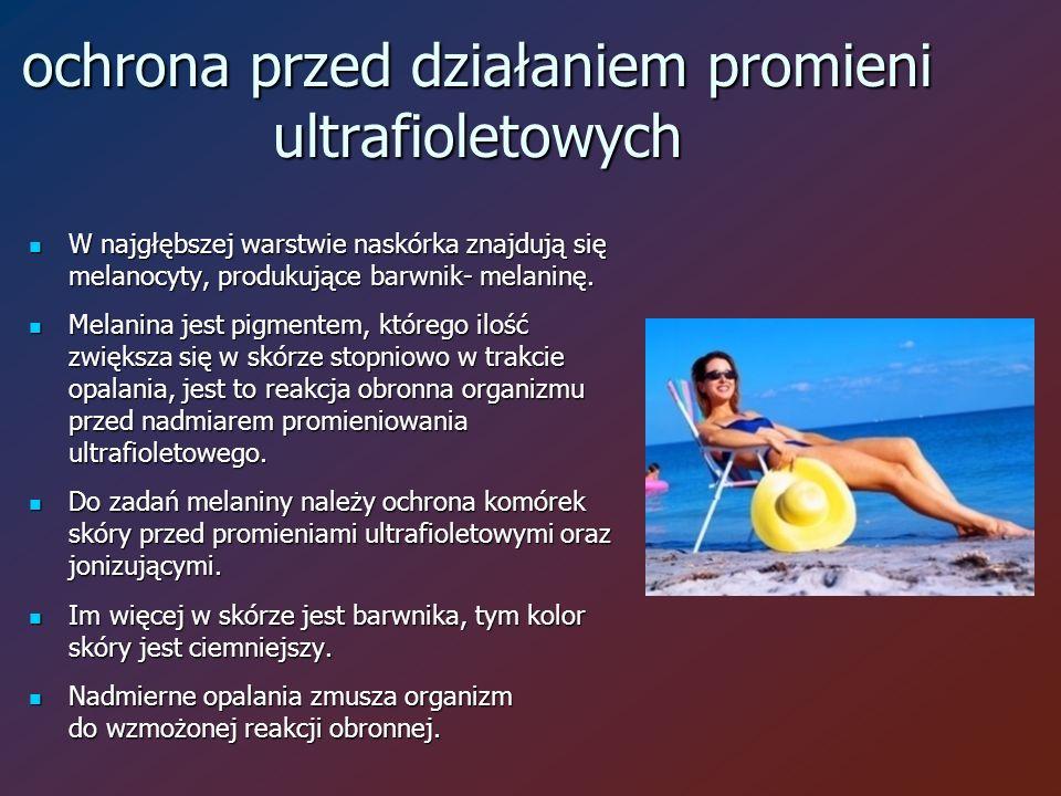 ochrona przed działaniem promieni ultrafioletowych W najgłębszej warstwie naskórka znajdują się melanocyty, produkujące barwnik- melaninę.