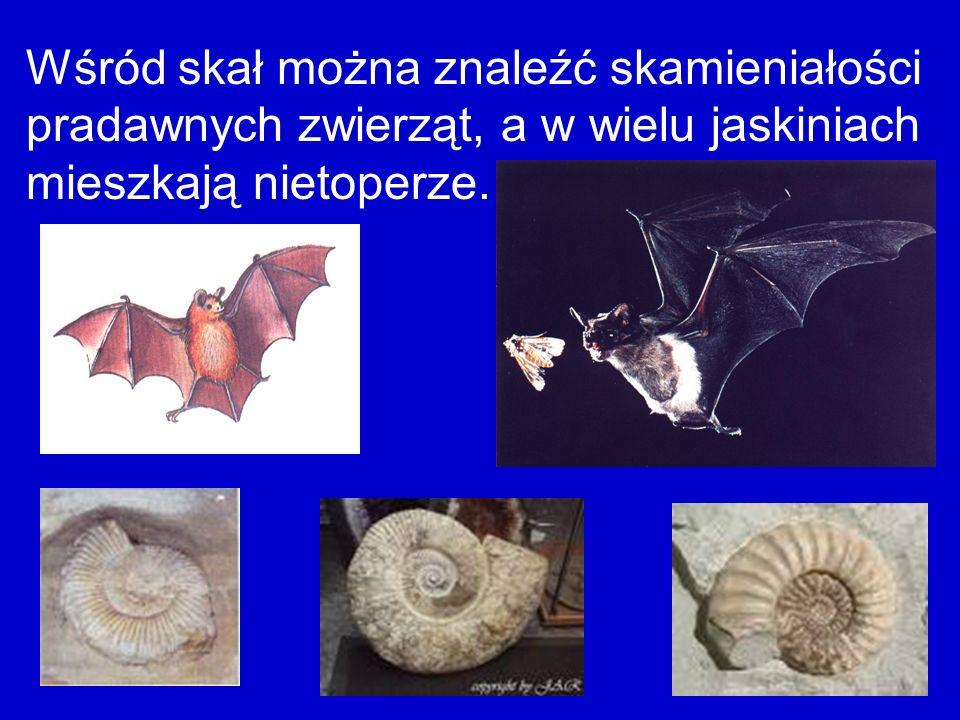 Wśród skał można znaleźć skamieniałości pradawnych zwierząt, a w wielu jaskiniach mieszkają nietoperze.