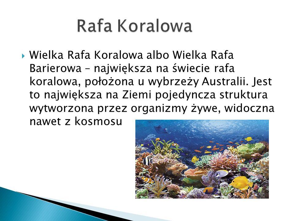  Wielka Rafa Koralowa albo Wielka Rafa Barierowa – największa na świecie rafa koralowa, położona u wybrzeży Australii. Jest to największa na Ziemi po