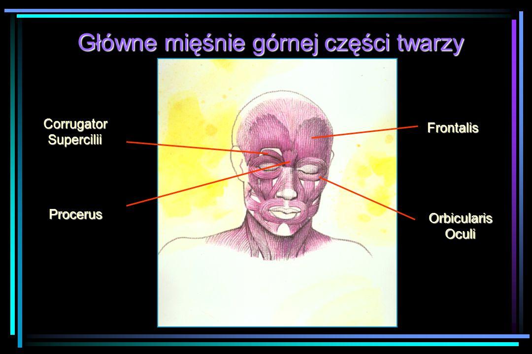 Główne mięśnie górnej części twarzy CorrugatorSupercilii Procerus Frontalis OrbicularisOculi