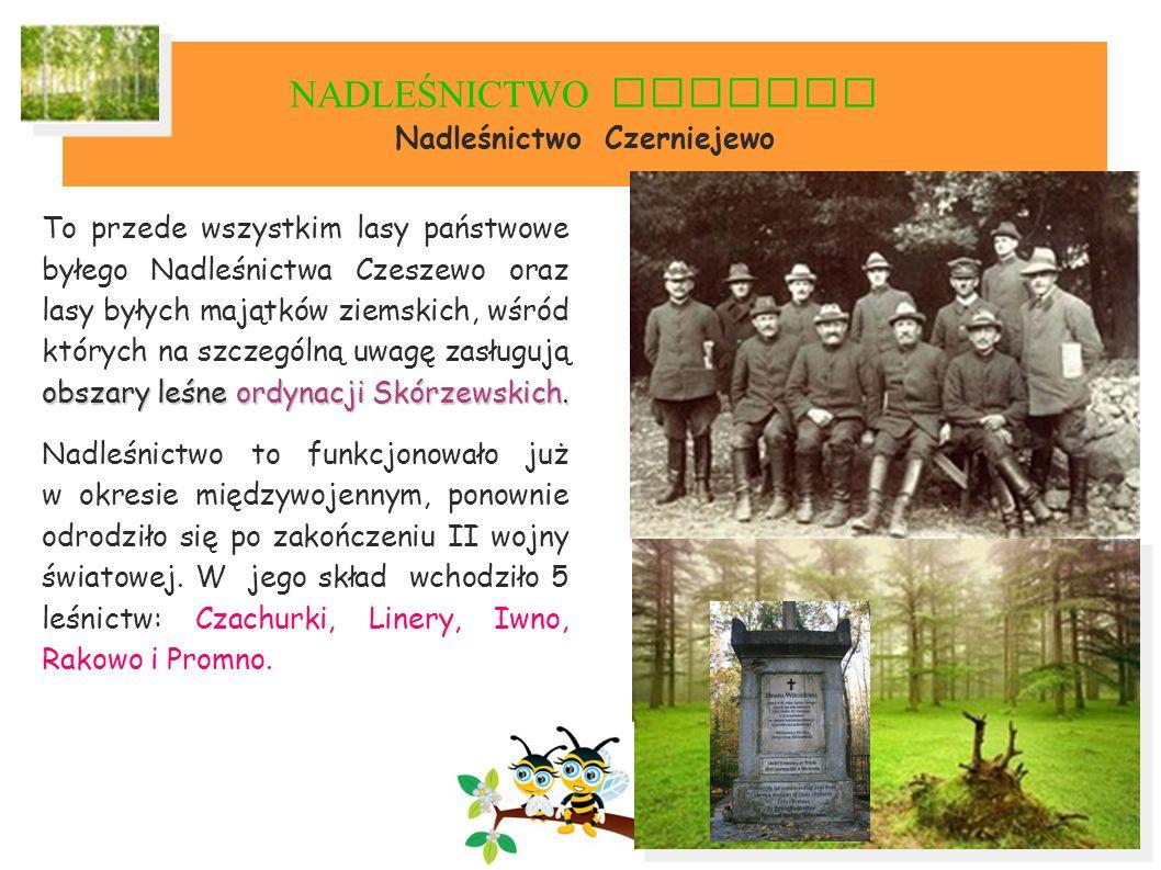 NADLEŚNICTWO GNIEZNO Nadleśnictwo Czerniejewo obszary leśne ordynacji Skórzewskich.