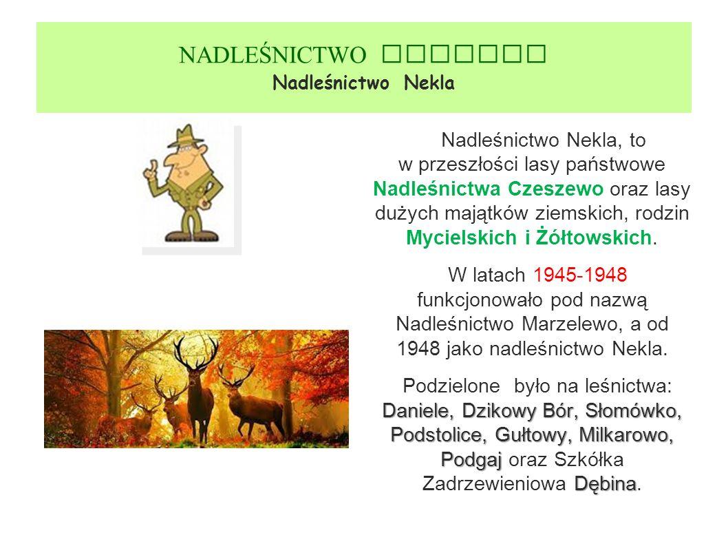 NADLEŚNICTWO GNIEZNO Nadleśnictwo Nekla Nadleśnictwo Nekla, to w przeszłości lasy państwowe Nadleśnictwa Czeszewo oraz lasy dużych majątków ziemskich, rodzin Mycielskich i Żółtowskich.
