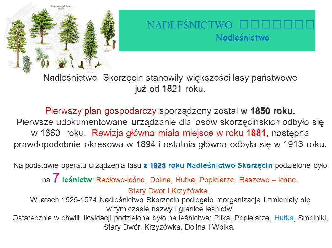 NADLEŚNICTWO GNIEZNO Nadleśnictwo Skorzęcin już od 1821 roku Nadleśnictwo Skorzęcin stanowiły większości lasy państwowe już od 1821 roku.