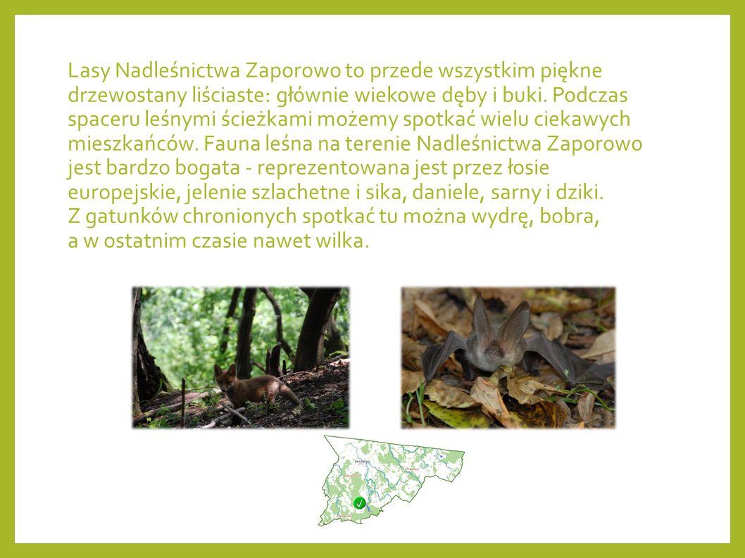 Nadleśnictwo Zaporowo położone jest w północnej części Polski, obejmuje zasięgiem powiat braniewski i część powiatu elbląskiego.