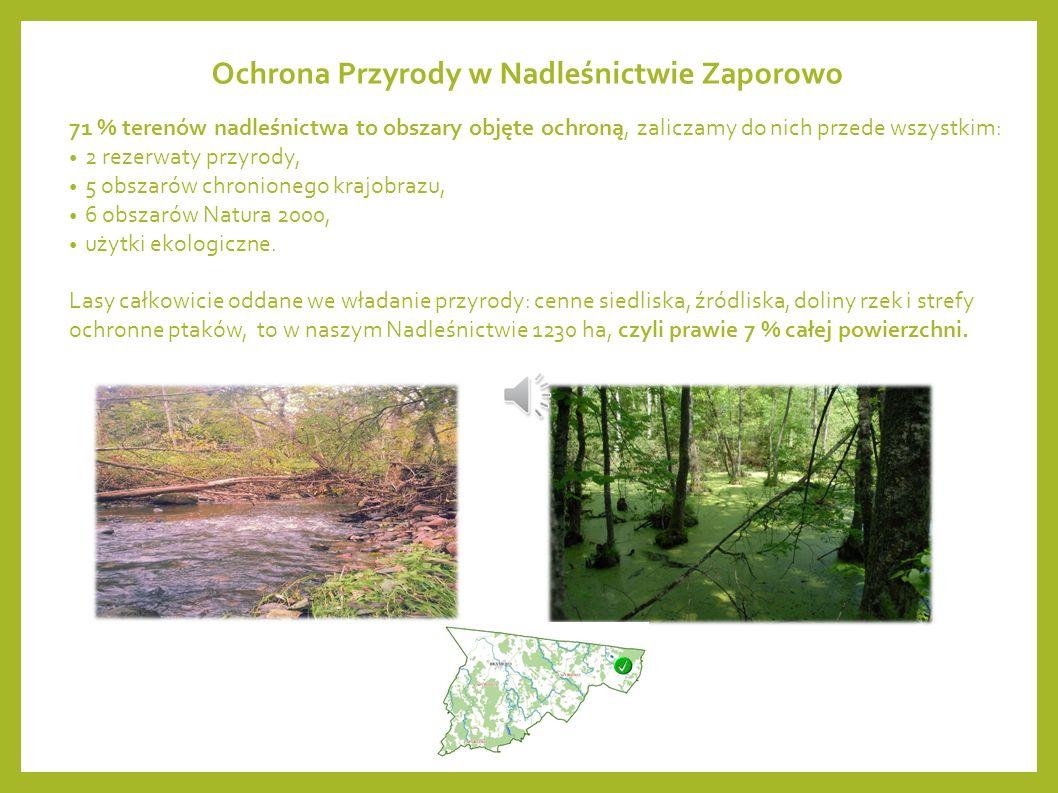 Lasy Nadleśnictwa Zaporowo to przede wszystkim piękne drzewostany liściaste: głównie wiekowe dęby i buki.