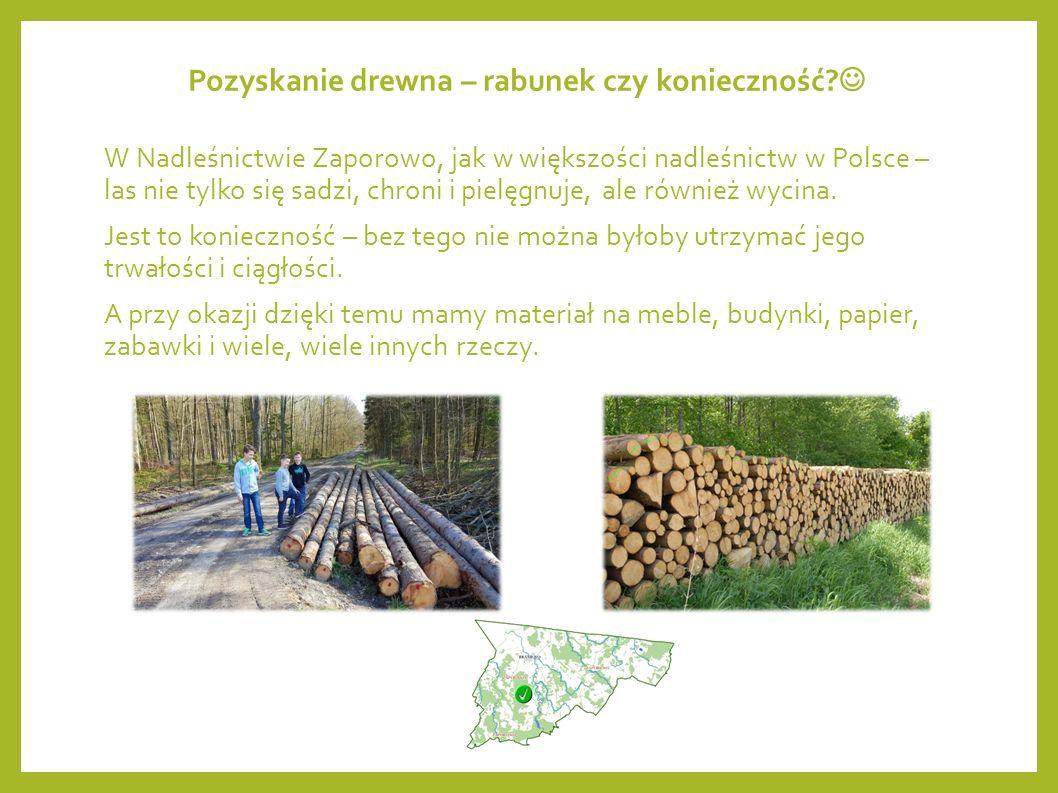 Szkółka leśna – nie tylko my musimy się uczyć Przy jeziorze, przy zakończeniu trasy edukacji na ścieżce rozwoju fizycznego i ścieżce zdrowia, znajduje się szkółka leśna.