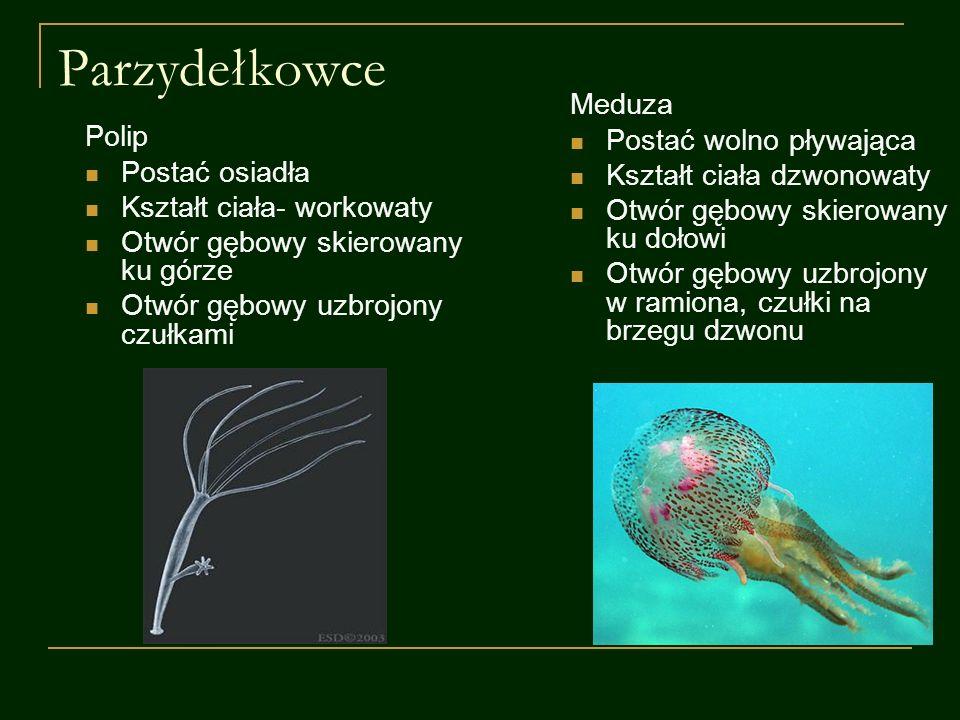 Pierścienice Czynności życiowe wieloszczetyskąposzczetypijawki Odżywianie się saprobionty- szczątki roślin i zwierząt pasożyty i drapieżniki Oddychanietlenowo, całą powierzchnią ciała Rozmnażanie się rozdzielno- płciowość obojnactwo Poruszanie siępełza, pływapełzapływa, kroczy