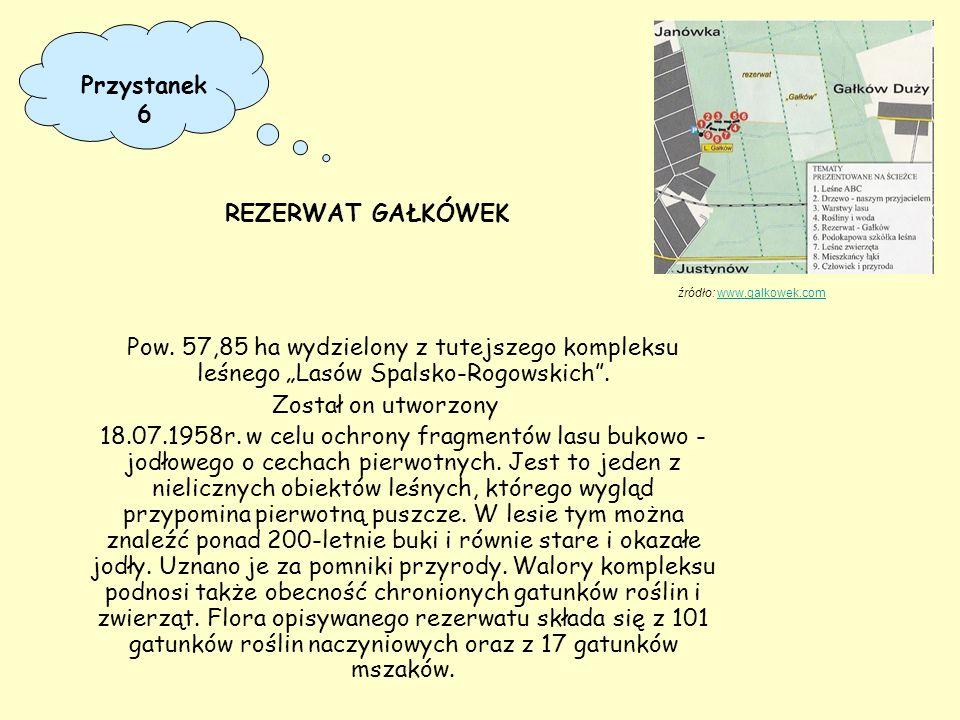 """Pow. 57,85 ha wydzielony z tutejszego kompleksu leśnego """"Lasów Spalsko-Rogowskich"""". Został on utworzony 18.07.1958r. w celu ochrony fragmentów lasu bu"""
