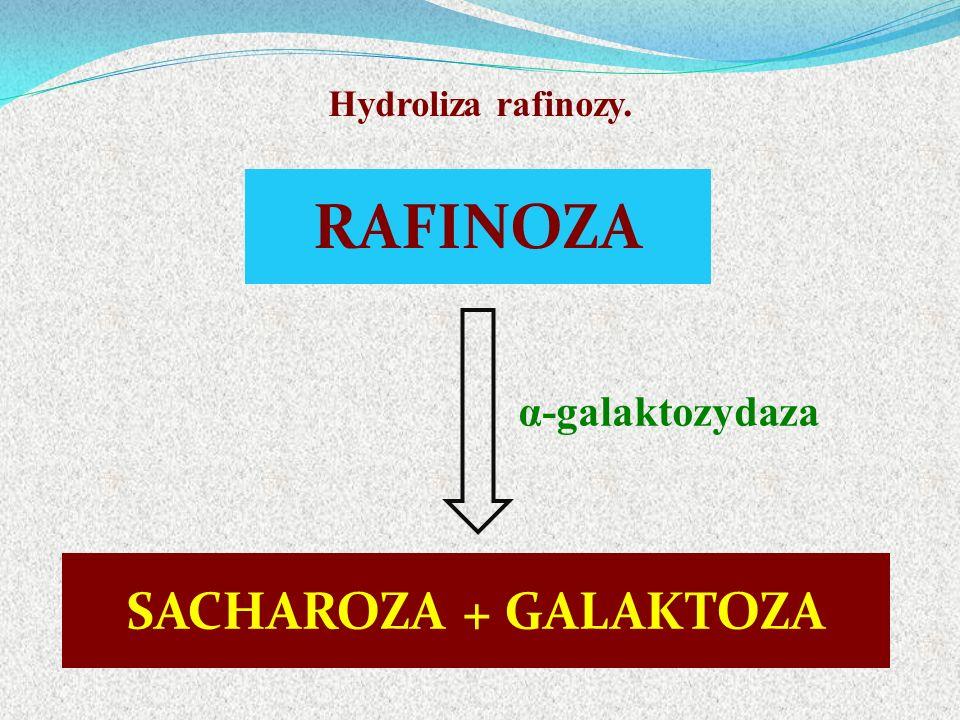 RAFINOZA α-galaktozydaza SACHAROZA + GALAKTOZA Hydroliza rafinozy.