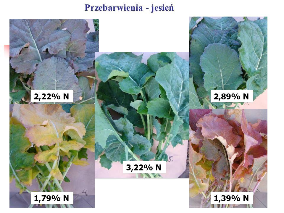 2,89% N 1,39% N 3,22% N 2,22% N 1,79% N Przebarwienia - jesień
