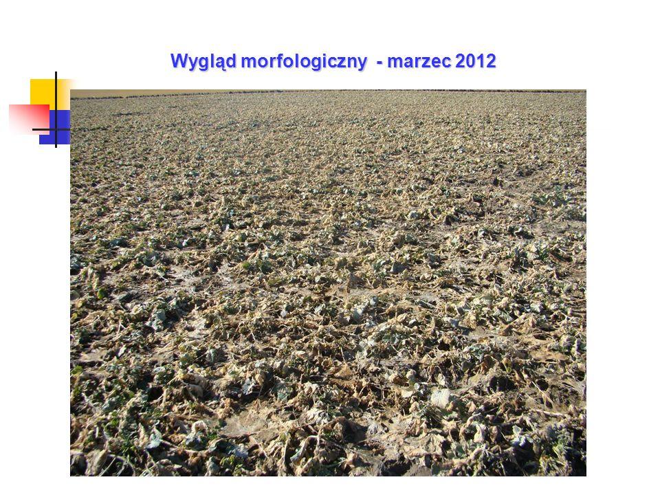 Wygląd morfologiczny - marzec 2012
