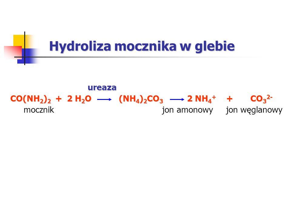 ureaza CO(NH 2 ) 2 + 2 H 2 O (NH 4 ) 2 CO 3 2 NH 4 + + CO 3 2- mocznik jon amonowy jon węglanowy Hydroliza mocznika w glebie