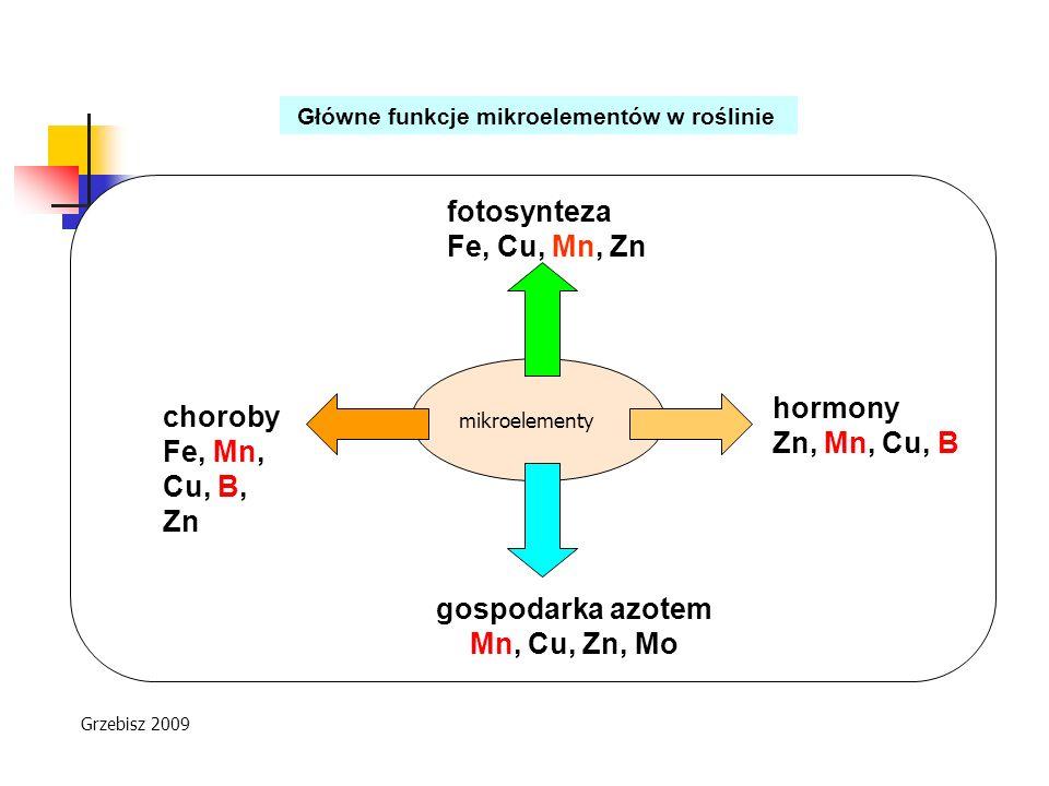 Główne funkcje mikroelementów w roślinie mikroelementy gospodarka azotem Mn, Cu, Zn, Mo choroby Fe, Mn, Cu, B, Zn fotosynteza Fe, Cu, Mn, Zn hormony Z