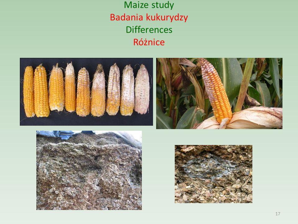 Maize study Badania kukurydzy Differences Różnice 17