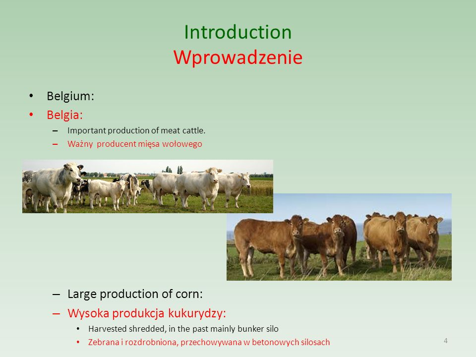 Introduction Wprowadzenie Belgium: Belgia: – Important production of meat cattle.
