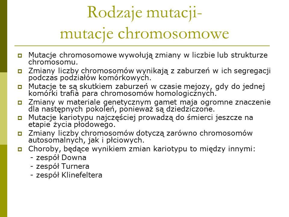 Rodzaje mutacji- mutacje chromosomowe  Mutacje chromosomowe wywołują zmiany w liczbie lub strukturze chromosomu.  Zmiany liczby chromosomów wynikają
