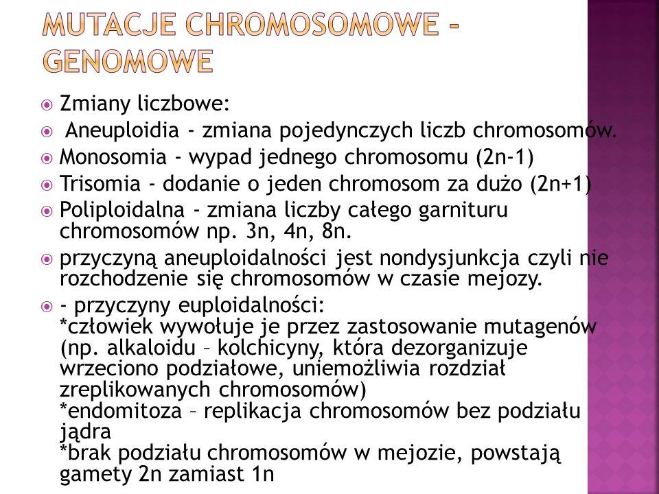  Zmiany liczbowe:  Aneuploidia - zmiana pojedynczych liczb chromosomów.