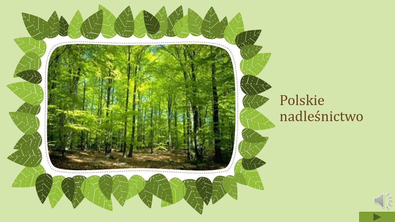 Polskie nadleśnictwo