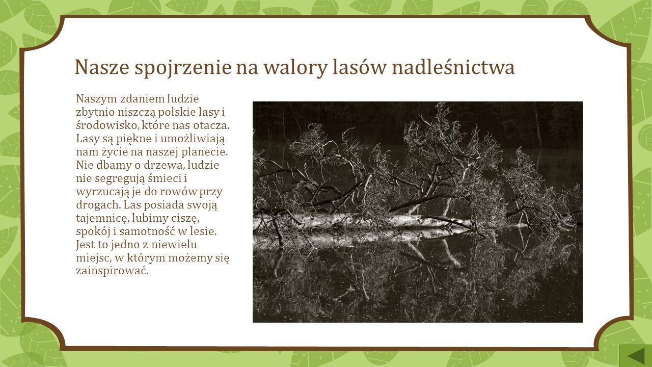 Nasze spojrzenie na walory lasów nadleśnictwa Naszym zdaniem ludzie zbytnio niszczą polskie lasy i środowisko, które nas otacza.
