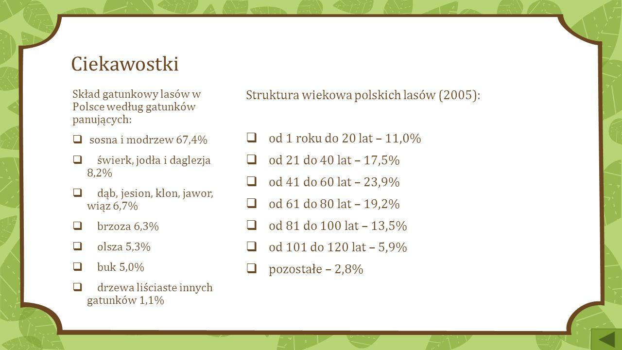 Ciekawostki Struktura wiekowa polskich lasów (2005):  od 1 roku do 20 lat – 11,0%  od 21 do 40 lat – 17,5%  od 41 do 60 lat – 23,9%  od 61 do 80 lat – 19,2%  od 81 do 100 lat – 13,5%  od 101 do 120 lat – 5,9%  pozostałe – 2,8% Skład gatunkowy lasów w Polsce według gatunków panujących:  sosna i modrzew 67,4%  świerk, jodła i daglezja 8,2%  dąb, jesion, klon, jawor, wiąz 6,7%  brzoza 6,3%  olsza 5,3%  buk 5,0%  drzewa liściaste innych gatunków 1,1%