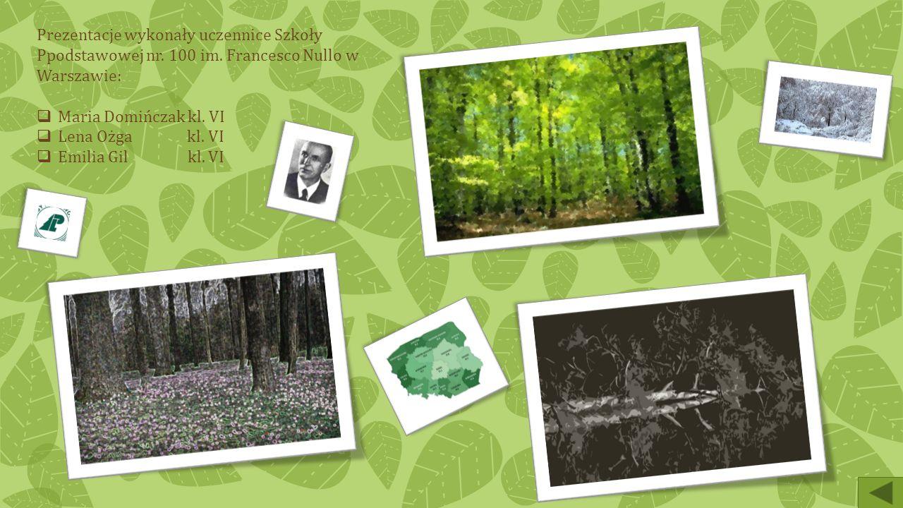 Ciekawostki Struktura wiekowa polskich lasów (2005):  od 1 roku do 20 lat – 11,0%  od 21 do 40 lat – 17,5%  od 41 do 60 lat – 23,9%  od 61 do 80 l