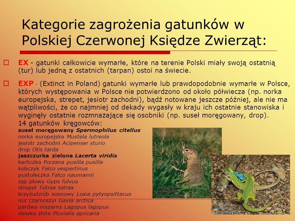 Kategorie zagrożenia gatunków w Polskiej Czerwonej Księdze Zwierząt:  EX - gatunki całkowicie wymarłe, które na terenie Polski miały swoją ostatnią (