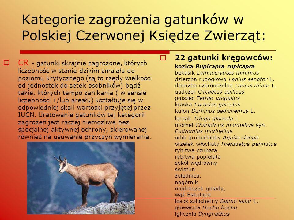  CR - gatunki skrajnie zagrożone, których liczebność w stanie dzikim zmalała do poziomu krytycznego (są to rzędy wielkości od jednostek do setek osob