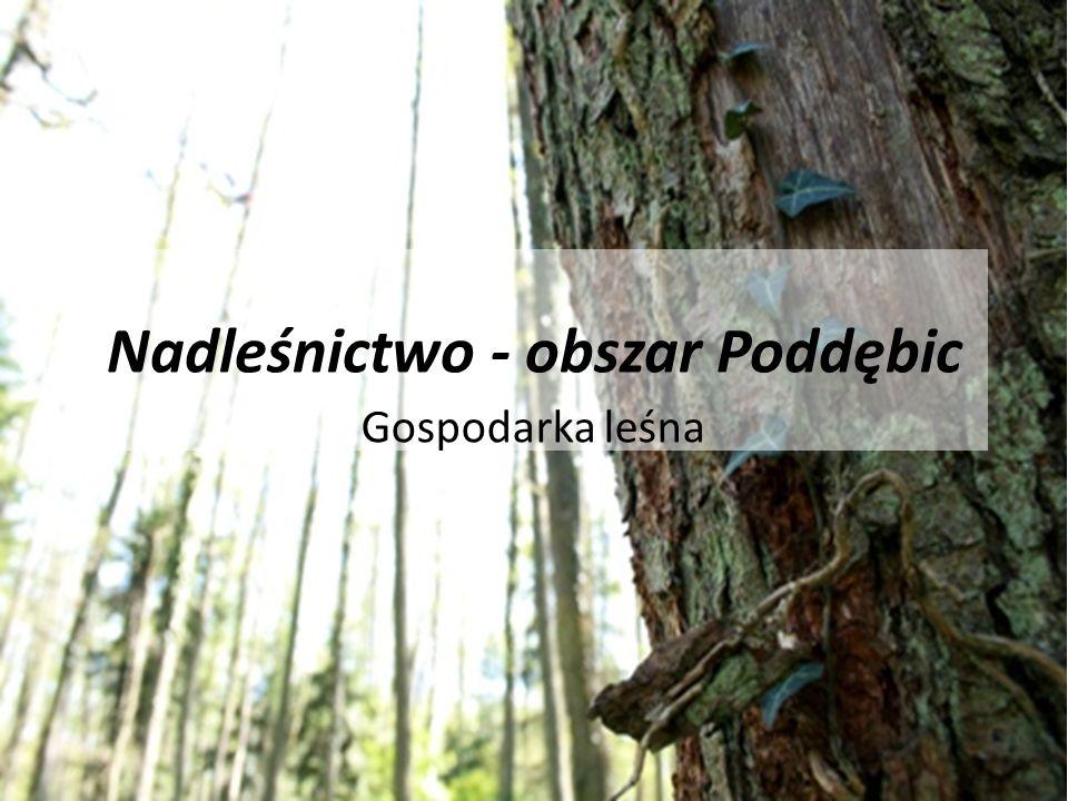 Nadleśnictwo - obszar Poddębic Gospodarka leśna