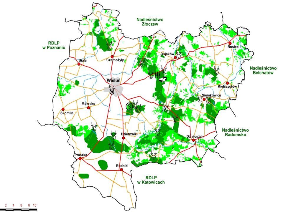 Gospodarka Leśna Poddębice Na terenie naszego nadleśnictwa przeżywają siedliska borowe z dominacją sosny. Średni wiek lasów na naszym terenie wzrasta